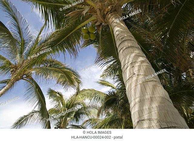Palm trees, Cabo San Lucas, Mexico