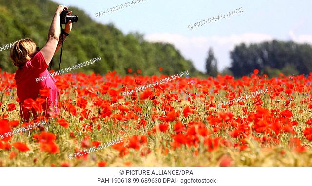 17 June 2019, Mecklenburg-Western Pomerania, Bad Doberan: In a field with barley, red poppy also grows, a passing car driver takes a picture of the colourful...