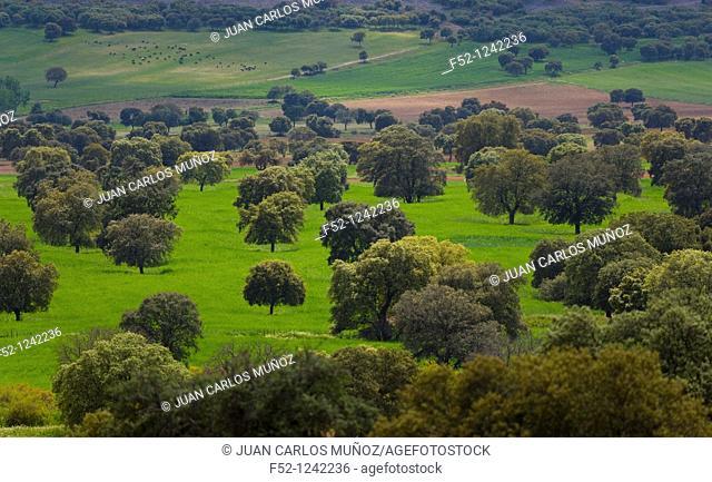Cabañeros National Park in spring, Ciudad Real province, Castilla-La Mancha, Spain