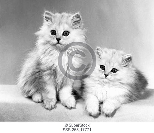 Close-up of two kittens
