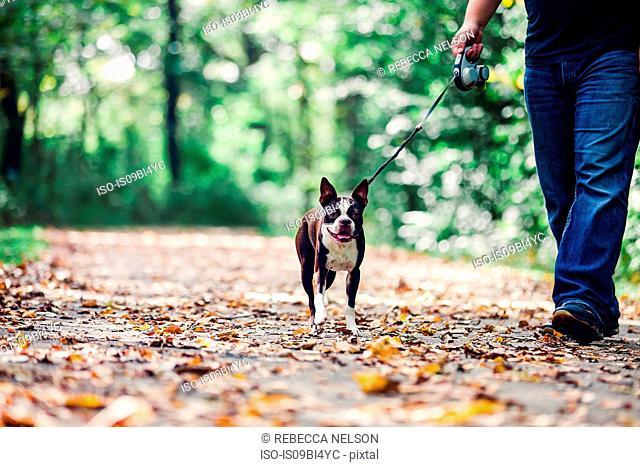 Man walking dog in rural setting, low section