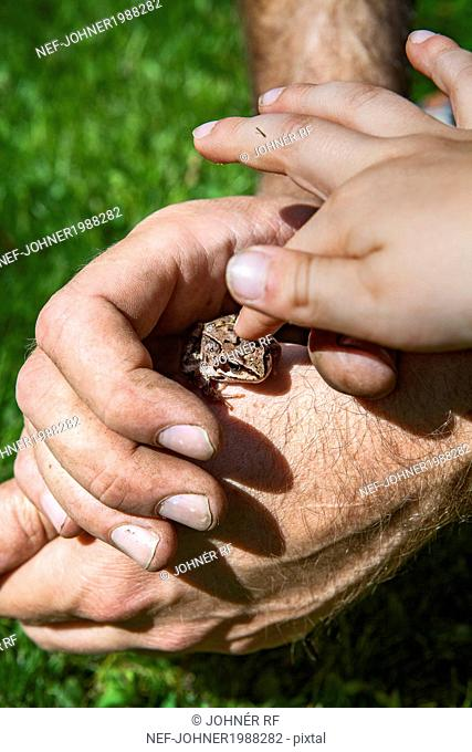 Childs hand touching frog