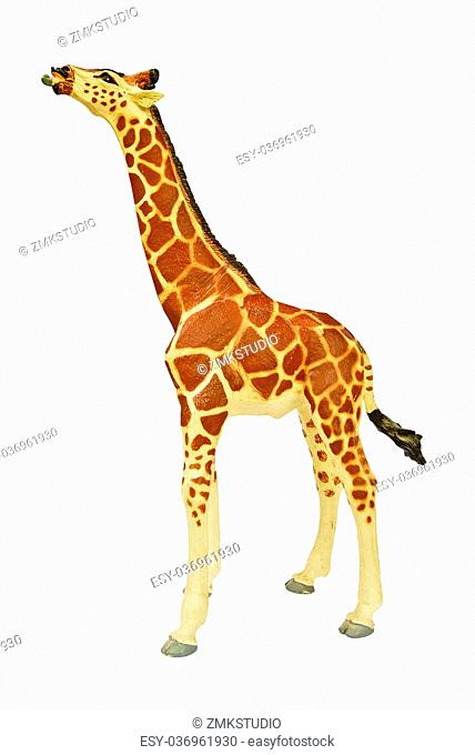 Giraffe isolated on white background with the high resolution and beautiful color