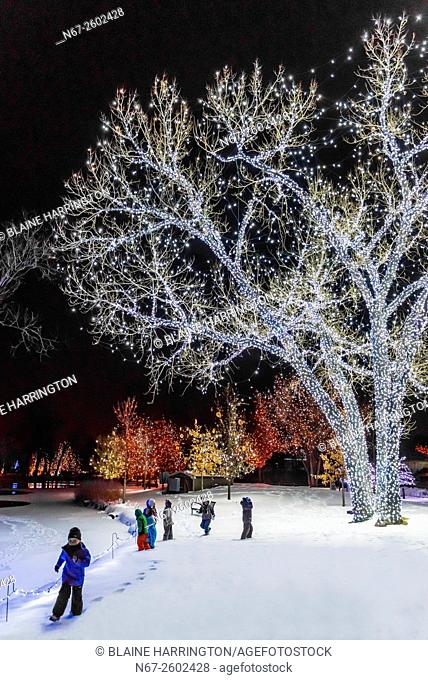 Children playing in snow, A Hudson Christmas (holiday light show at Hudson Gardens), Littleton, Colorado USA