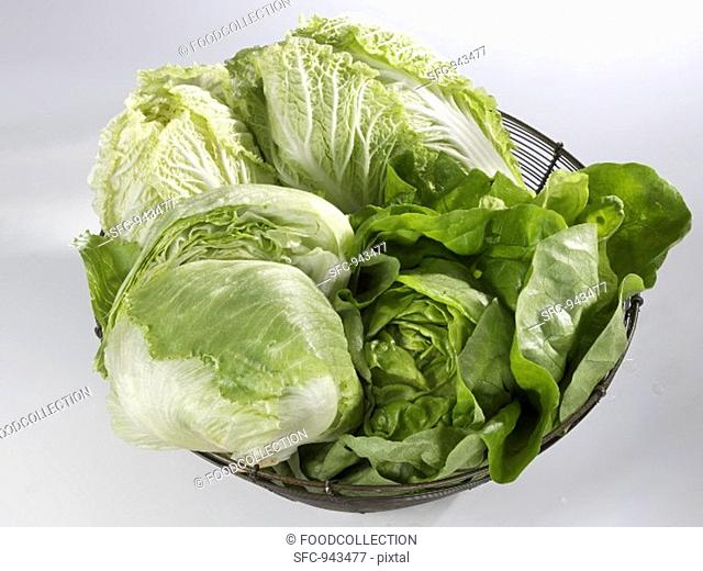 Lettuce, Chinese cabbage & iceberg lettuce in wire basket