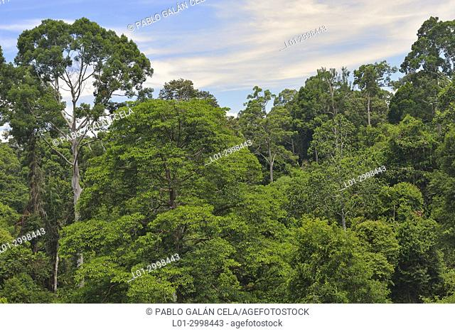 Jungle near Sandakan city, Borneo. Malaysia