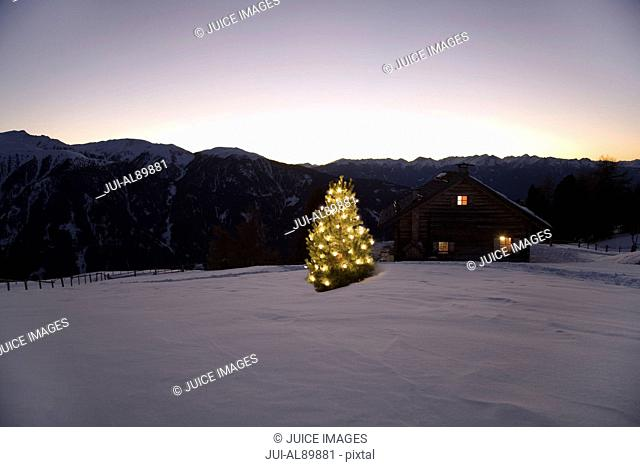 Chalet and Christmas tree at night, Luesener Alm, Dolomite Alps, South Tyrol, Italy