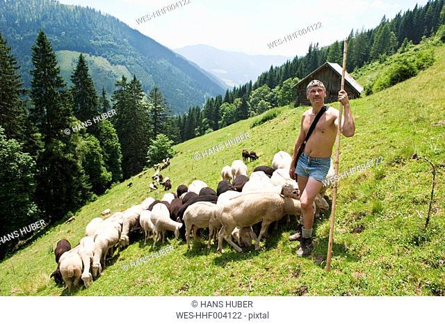 Austria, Salzburg County, Shepherd herding sheep on mountain
