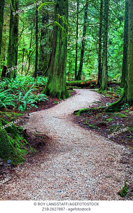 Walking trail through a temperate rain forest in Vancouver