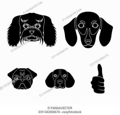 Muzzle of different breeds of dogs.Dog breed of dachshund, lapdog, beagle, pug set collection icons in black style vector symbol stock illustration