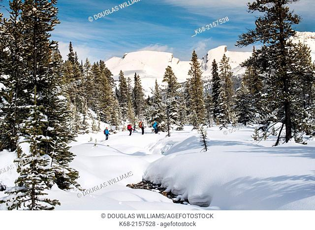 skiers in winter at Mosquito Creek, Banff National Park, Alberta, Canada