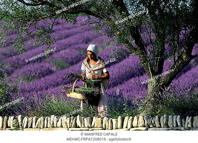 Woman in a lavender field on the plateau of Valensole