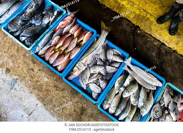 Wide variety of fish red snappers, bluegills, ... is seen for sale at the seafood and fish market in Veracruz, Mexico
