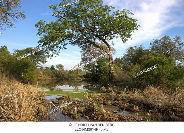 Tranquil river scene, Kruger National Park, Mpumalanga Province, South Africa