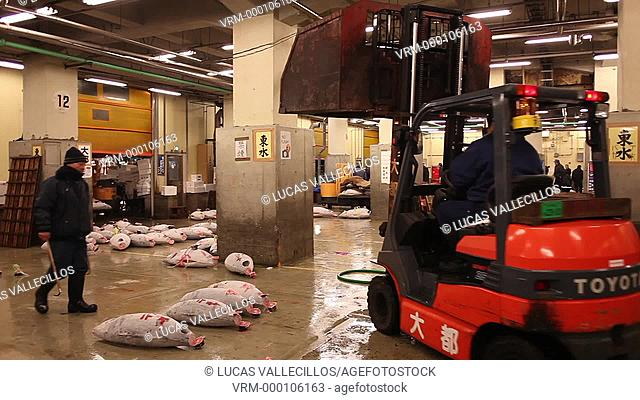 Auction of tuna in Tsukiji market, biggest fishmarket in the world.Tokyo city, Japan, Asia