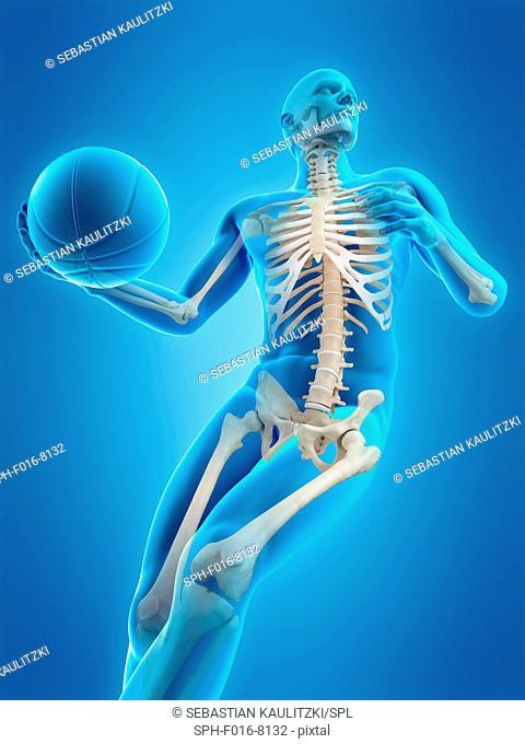 Skeletal structure of a basketball player, illustration