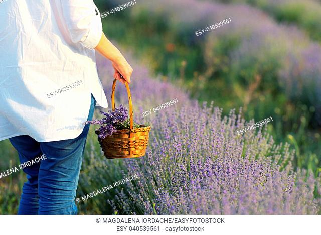 woman with basket and a lavender field