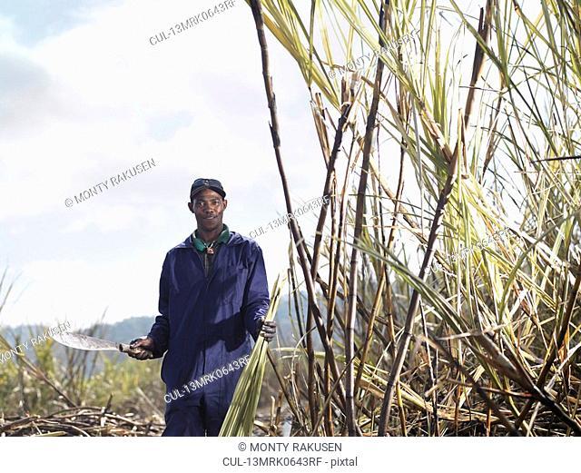 Worker Holding Machete In Sugar Cane