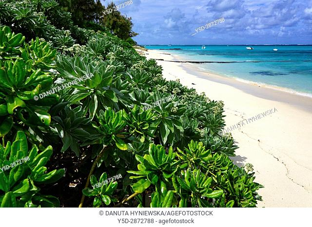 Paradise unspoilt beach in Blue Bay, Mauritius, Africa
