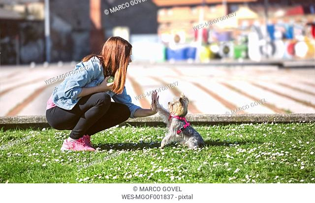 Young woman playing with her Yorkshire Terrier on a meadow