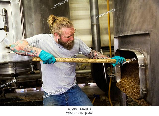 Man raking spent grain from a large kettle or mash pan in a brewery