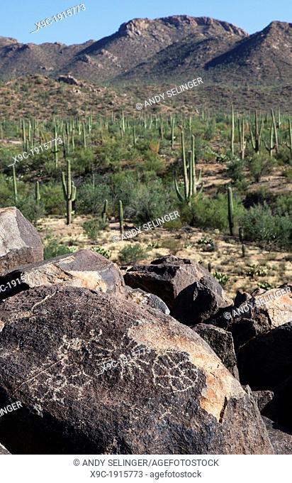 Rock Art in Saguaro N P, Arizona, USA