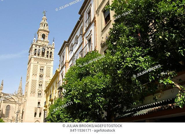 Looking up at the Giralda tower in Seville, Orange trees in foreground