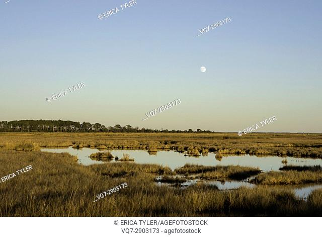 Moon Rises Over the Marshes of the Chesapeake Bay in Crisfield, Maryland