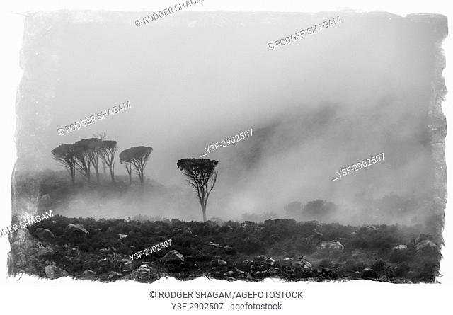 Grey and cold atmosphere on a mountainside