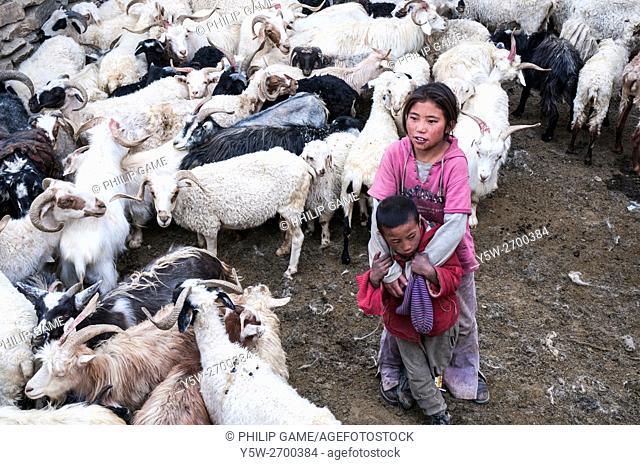 Children herding goats at Korzok, a remote high altitude village in Ladakh, northern India