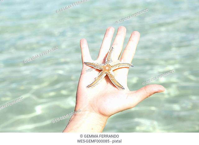 Woman's hand holding starfish