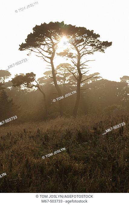 Sunlight through trees. Cornwall, England, UK