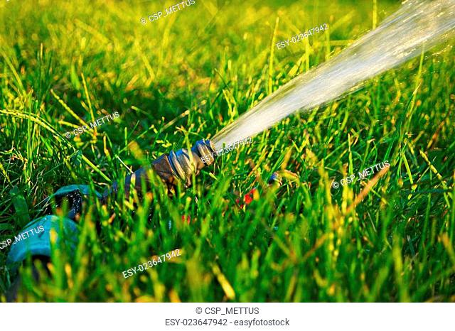Garden watering. Flow of water pouring out of pipe in fresh green grass with spot of sunlight on background. Blurred foreground