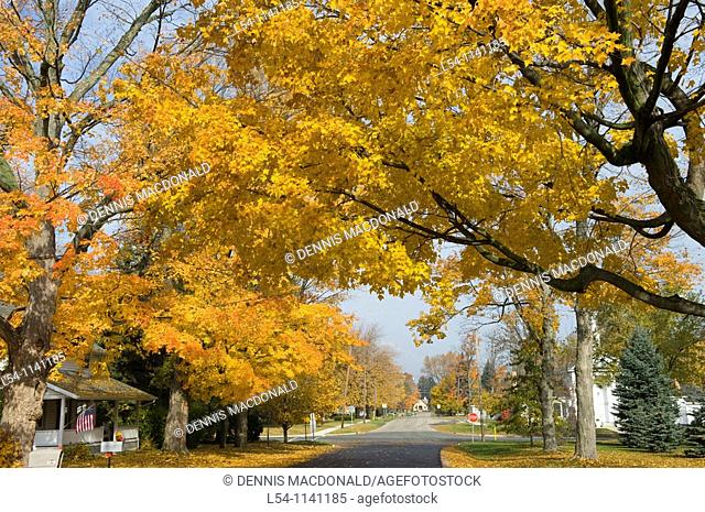 Fall Autumn colors line an old residential street in Lexington Michigan