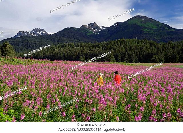 Couple hiking among Fireweed Admiralty Is Tongass National Forest Southeast Alaska Summer