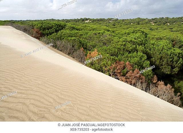 Sand dunes, Doñana National Park. Huelva province, Andalucia, Spain