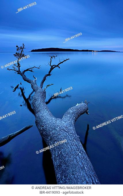 Oak tree trunk lying in water, Greifswalder Bodden, Isle of Vilm behind, dusk, Putbus, Rügen, Mecklenburg-Western Pomerania, Germany