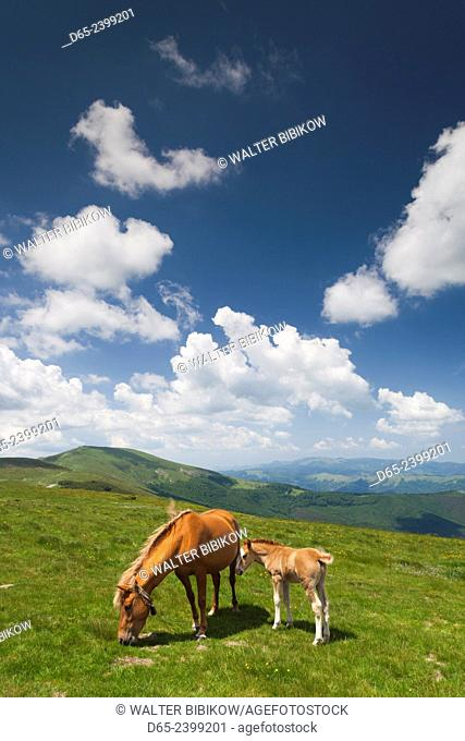 Bulgaria, Central Mountains, Troyan, Troyan Pass, elevation 1525 meters, horses