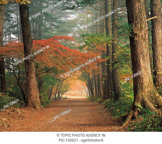 Tree-Lined Road In Autumn,Korea