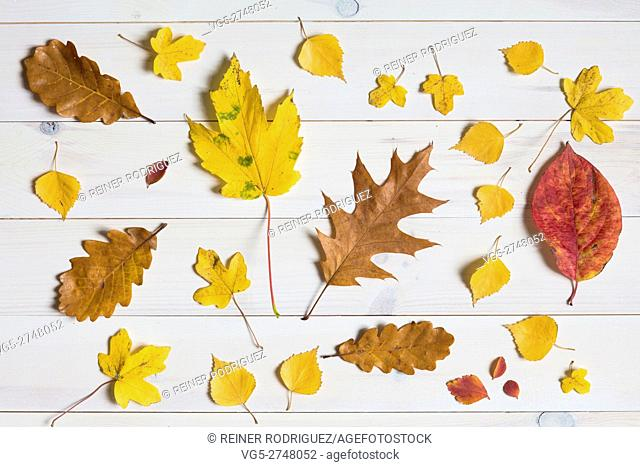 colorful leafs on a white wooden background. graphic flat lay symbolising autumn / fall
