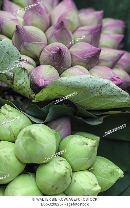 Cambodia, Phnom Penh, lotus flowers