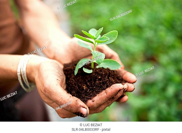 Woman cupping sprout in dirt