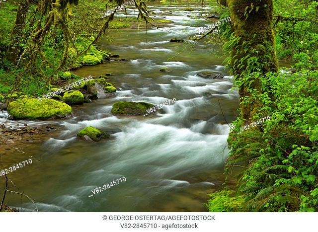 Fall Creek, Oregon Hatchery Research Center, Benton County, Oregon