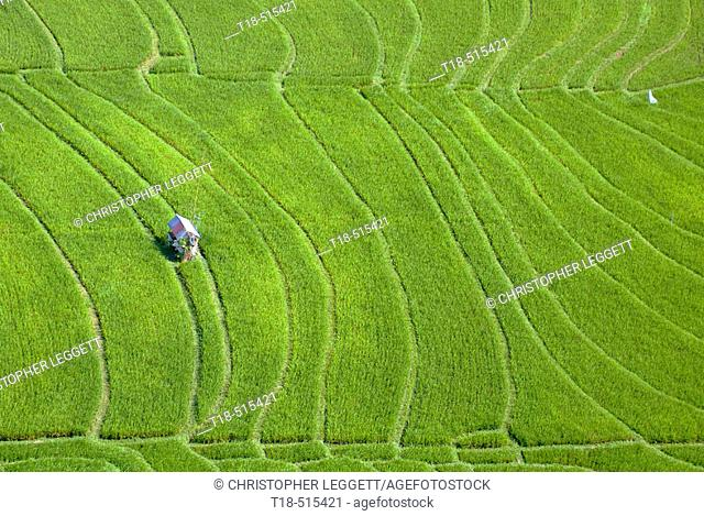 Aerial view of hut amidst rice field, Canggu, Indonesia