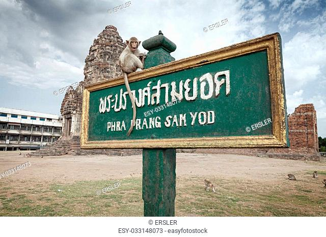 monkey old temple phra prang sam yod wat in Lopburi, Thailand