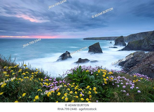 Wildflowers growing on the clifftops above Bedruthan Steps on a stormy evening, Cornwall, England, United Kingdom, Europe