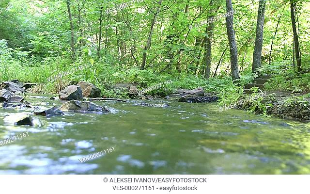 Fast-flowing water in a forest stream
