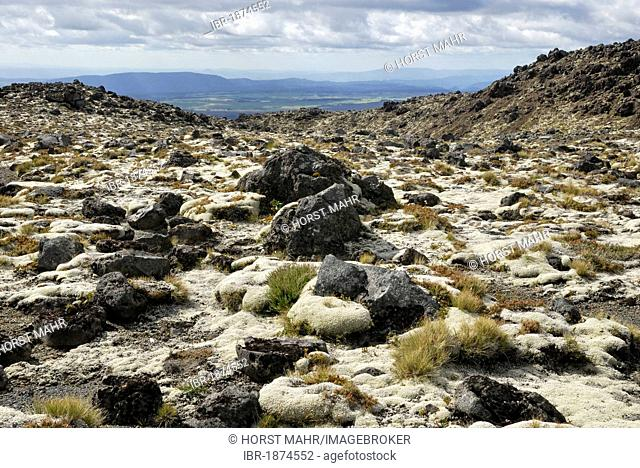 Volcanic rocks partly overgrown with moss, Mount Ruapehu, Tongariro National Park, North Island, New Zealand