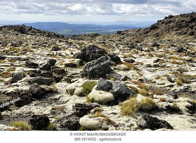 Volcanic rocks partly overgrown with moss, Mount Ruapehu, Tongariro National Park, North Island, New Zealand