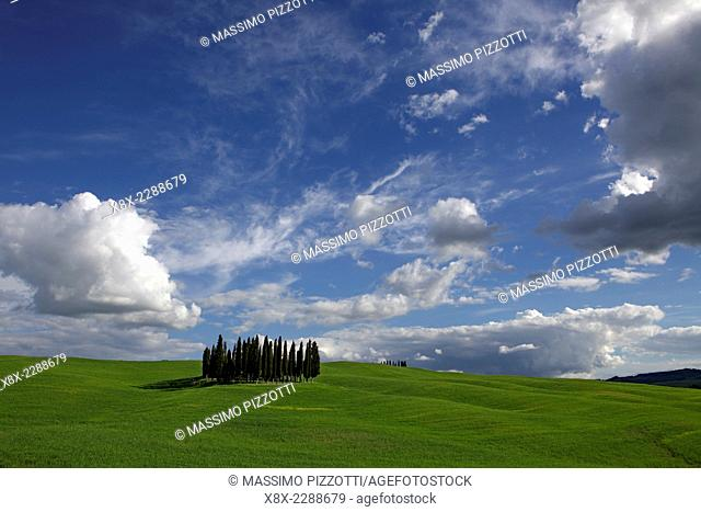 A grove of cypress trees on green hills, near San Quirico d`Orcia, Val d'Orcia, Tuscany, Italy